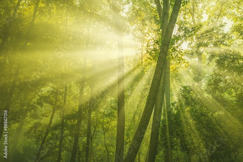 Green Forest with sunbeam