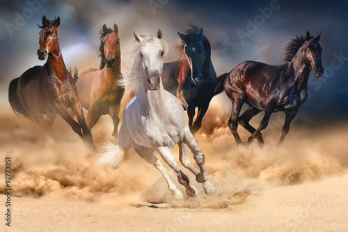 Horse herd run in desert sand storm against dramatic sky