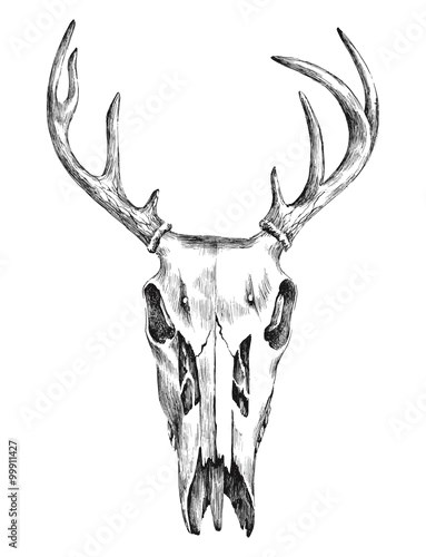 Hand drawn black and white deer scull
