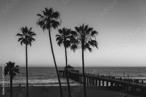 Palm trees at Manhattan Beach. Vintage post processed. Fashion, travel, summer, vacation and tropical beach concept.