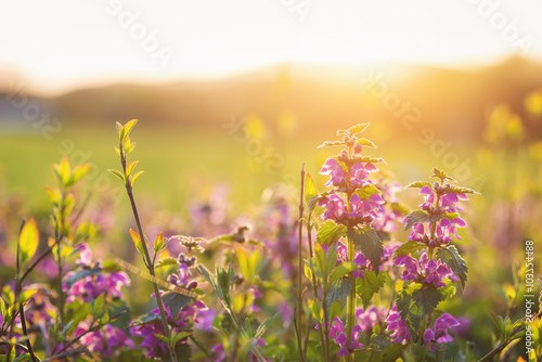 Summer meadow with colorful flowers. Sunny nature, sunset