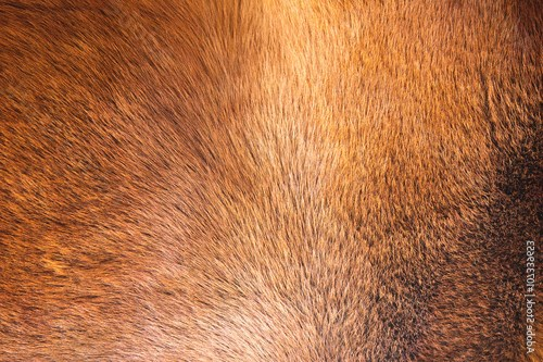 natural fur texture background