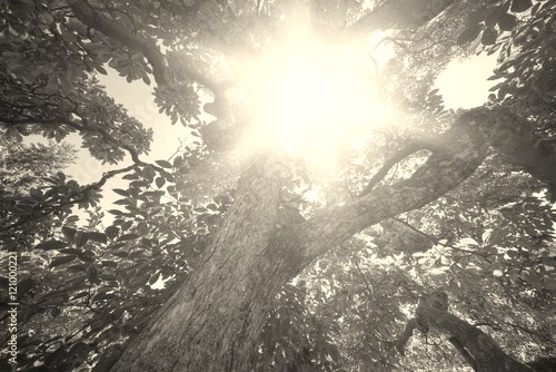 sun rays through trees leaves