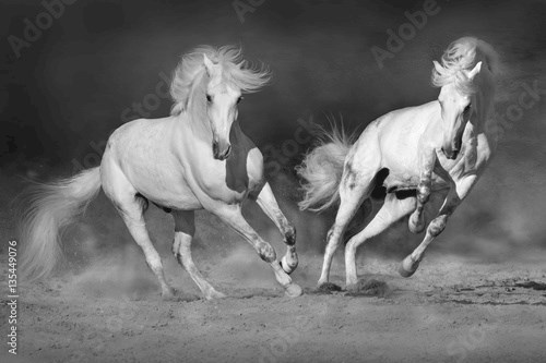 Cople horse in motion in desert  against dramatic dark background