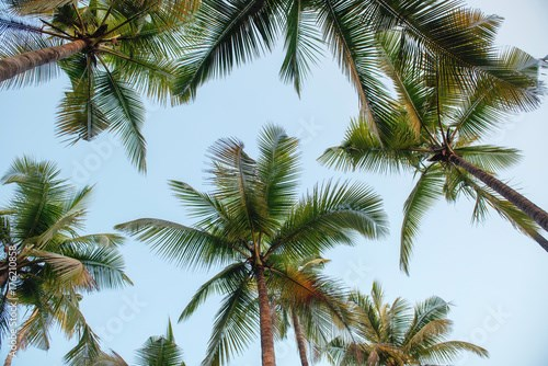 Palm tree background with sky