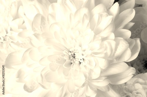White flower background