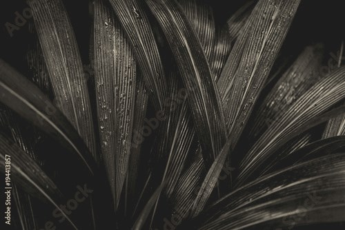 Plant background