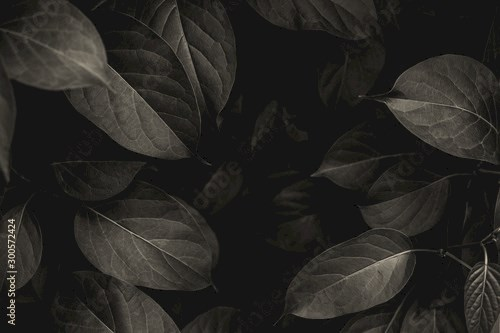 closeup tropical green leaves texture and dark tone process, abstract nature pattern background