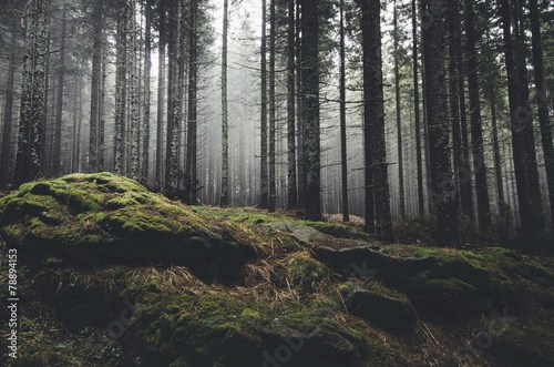 wilderness landscape forest with pine trees and moss on rocks