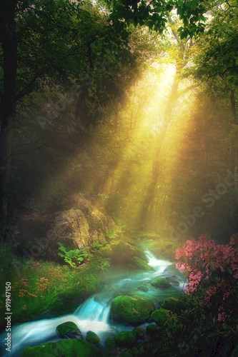 Morning Stream