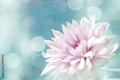 A pink flower with blue halos in atextured background