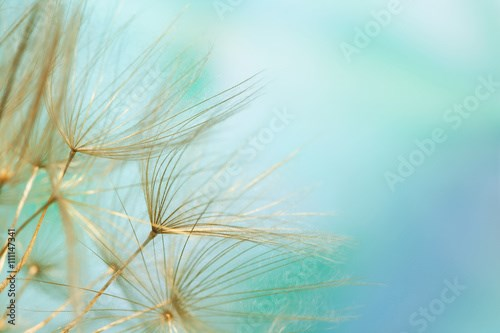 Close-up of dandelion seed on abstract blue background