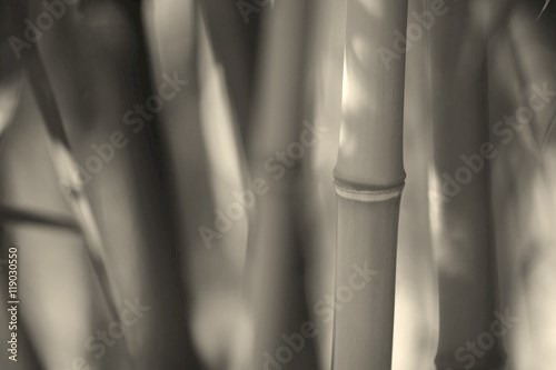 a close-up of bamboo branches