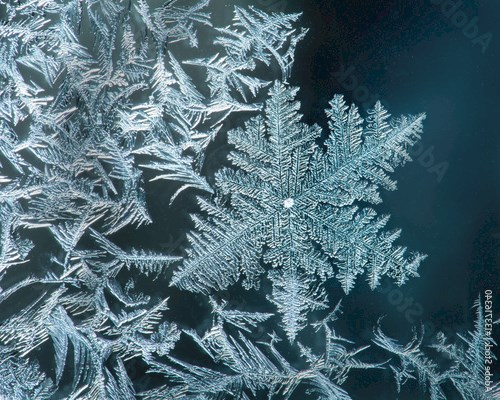 Surface Hoar Frost Crystals