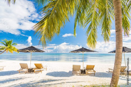 Loungers and palm trees on the beach. Vacation holiday background concept