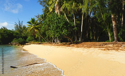 Beach with Palm Tree in a Tropical Location