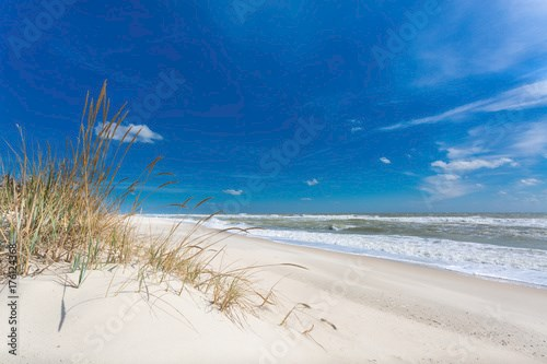 Beautiful daylight seascape with green plants and clear sand