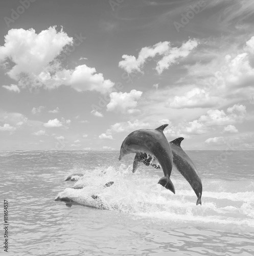 pack of jumping dolphins, beautiful seascape with deep ocean waters and cloudscape at bright day